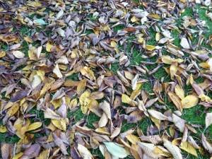 Leaves lawn
